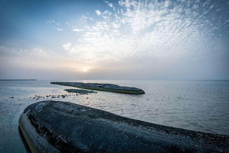 Sir Bani Yas  Island