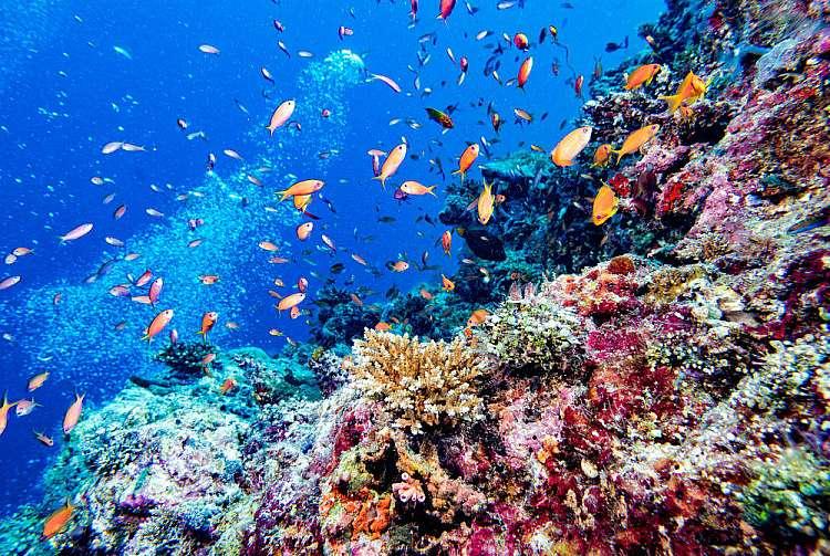 Fondali delle Maldive