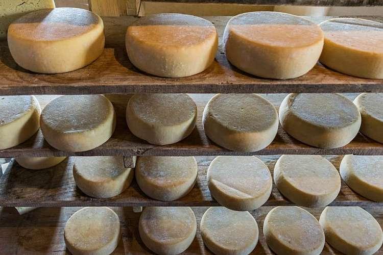 Il formaggio di malga