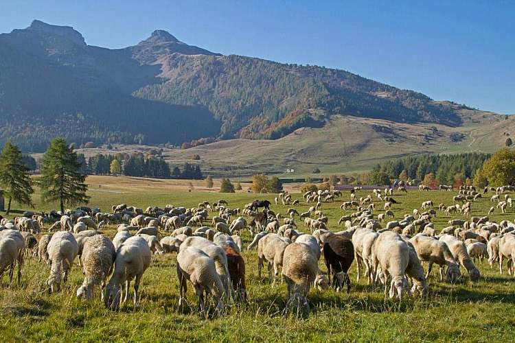 Estate in Trentino: All Inclusive  -  Bambini gratis fino a 11 anni