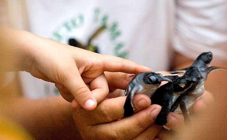 L'isola incontaminata di Fernando de Noronha: tartarughe protette dalla cooperativa TAMAR