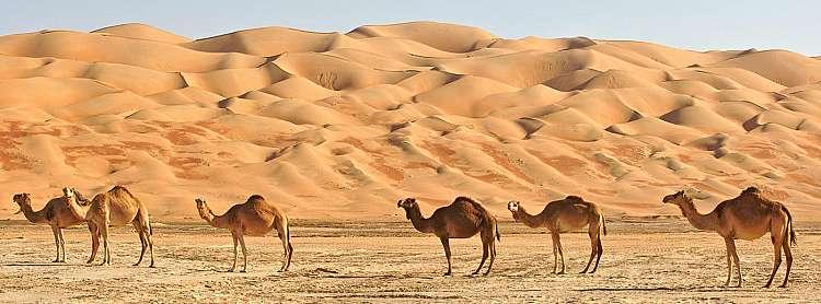 Capodanno nel deserto e soggiorno mare dal 29 dicembre al 05 gennaio