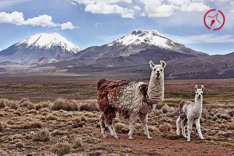 Altopiano della Bolivia