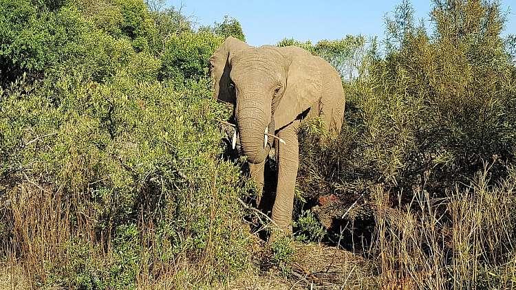 Uno dei tanti incontri durante il Safari