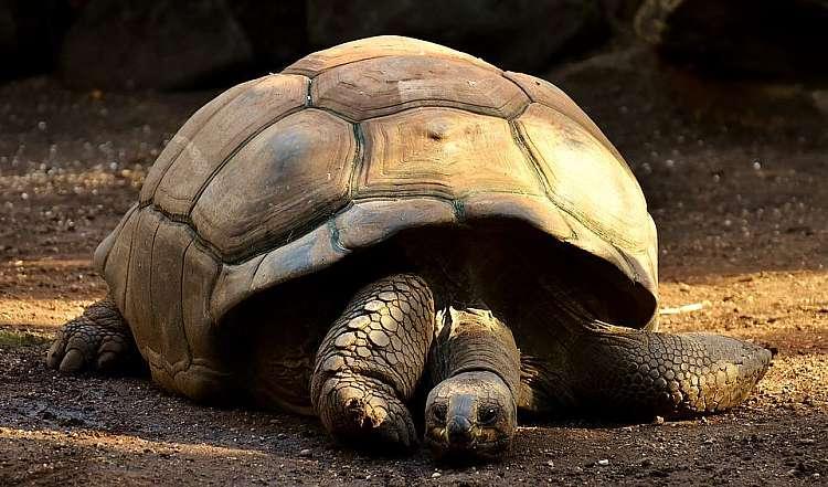 A Zanzibar potrete visitare le tartarughe giganti