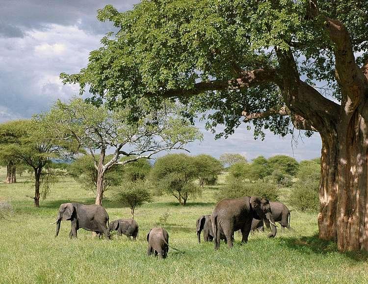 Tanzania del Sud Safari Dell'ippopotamo Parchi Selous E Ruaha A