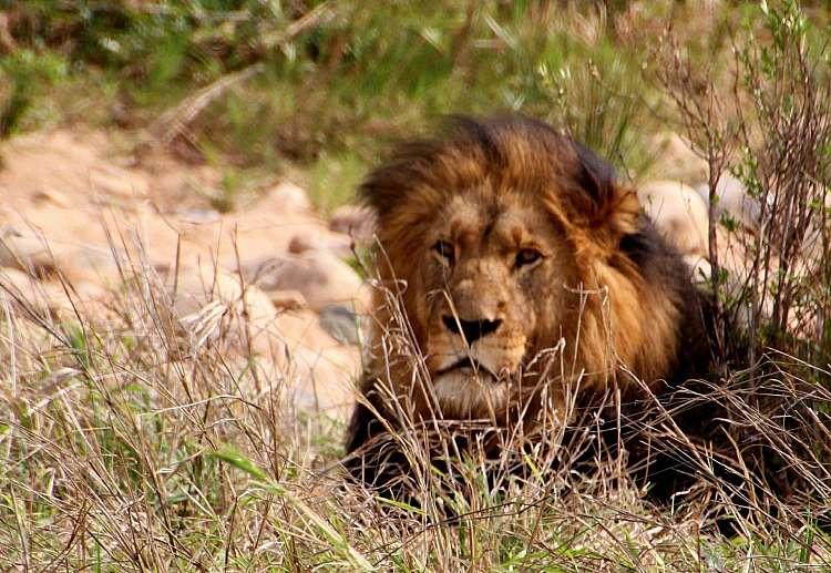 Sudafrica. Safari di gruppo. avventura di 11 giorni 10 notti (A)