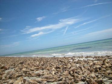 Giugno sulle coste sud occidentali della Sicilia