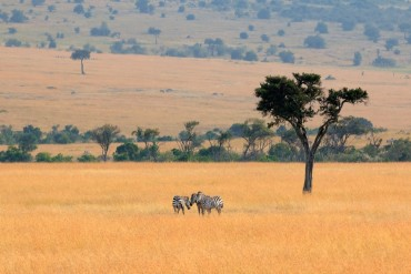 Masai Mara, il Kenya da 2213 euro mezza pensione
