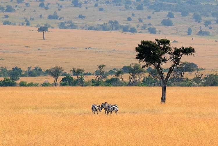 Masai Mara, il Kenya da 2213 euro