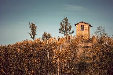 Fotografie e degustazioni: colline Unesco Langhe, Monferrato e Roero solo colazione