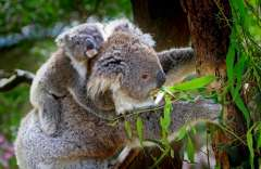 Australia, gli imperdibili: il primo viaggio non si scorda mai