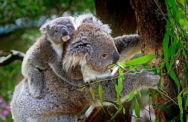 Australia, gli imperdibili: il primo viaggio non si scorda mai solo colazione