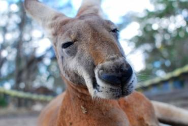 Viaggio individuale in Australia: tour completo in 3 settimane