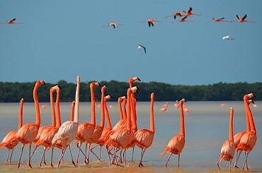 Scopri la Natura e l'Archeologia dello Yucatán in questo Mini Tour!!