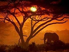 Magico Kenya. Safari +mare.  Viaggio con guida e autista