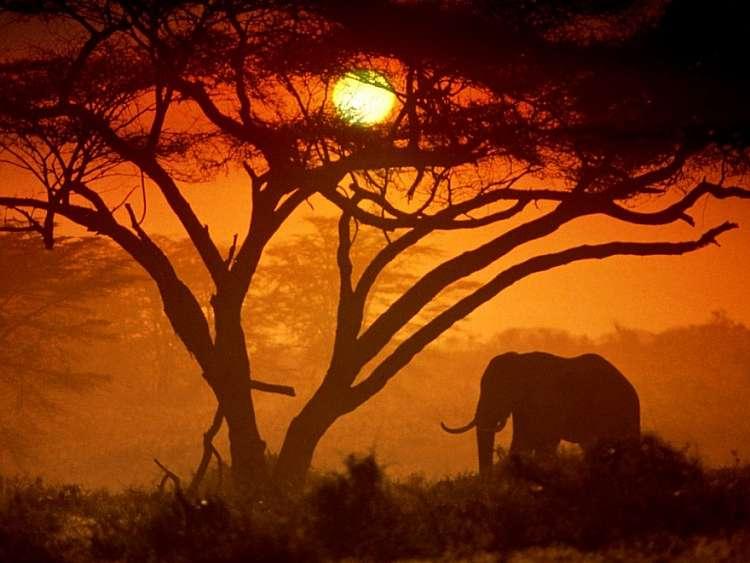 Magico Kenya. Safari +mare.  Viaggio con guida e autista (A)