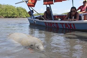 I segreti della riserva Potiguara con guida in lingua italiana