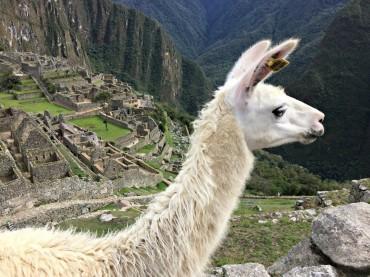 Tour individuale in bus e in treno dei siti più importanti del Perù