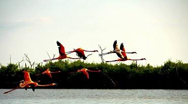 Offerta per gli amanti del Self-Drive!!  Yucatan & Chiapas in Libertà