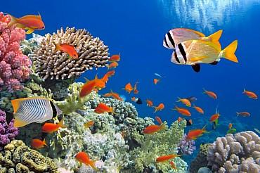 Sharm Sheikh Il Mare Più Bello del Mondo Al Prezzo Più Basso Del Mondo all inclusive