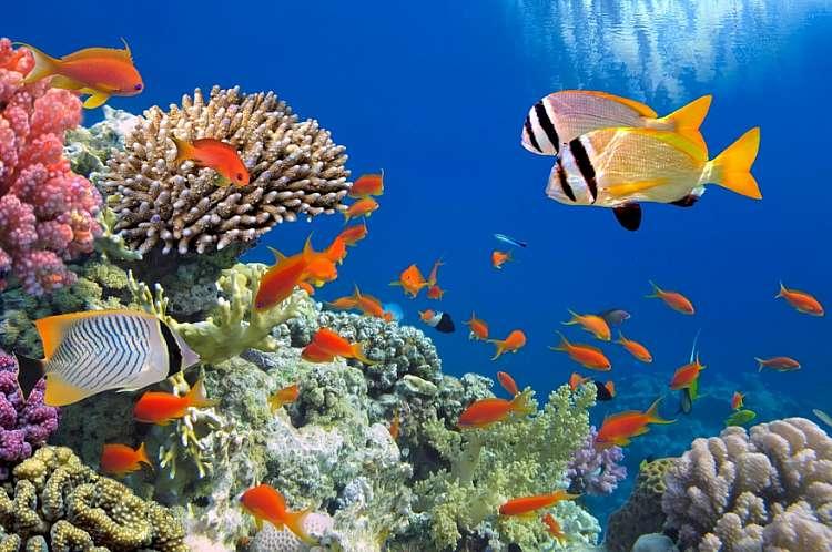 Sharm Sheikh Il Mare Più Bello del Mondo Al Prezzo Più Basso Del Mondo