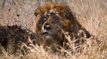 Safari in Sudafrica e Mauritius, la perla dell'Oceano Indiano mezza pensione