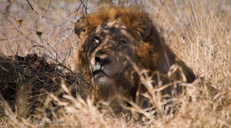 Safari in Sudafrica e Mauritius, la perla dell'Oceano Indiano