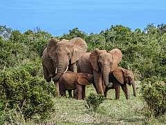 Sudafrica:  Città del Capo e safari al Parco Nazionale Kruger
