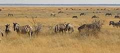 La Splendida Namibia. SCONTO SPECIALE. Prenotazione on line.