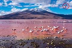 Avventuroso tour in Cile, Bolivia e Argentina alla scoperta delle Ande