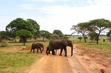 Tanzania. Safari classico. SCONTO SPECIALE. Prenotazione on line