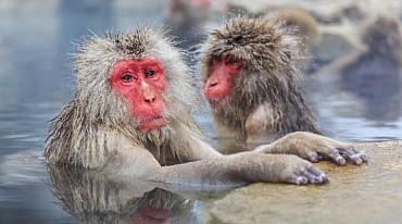 Viaggio in Giappone: Castelli, terme e scimmie delle nevi