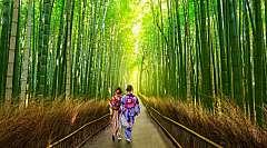 Viaggio in Giappone: Sol Levante Express e le città più importanti