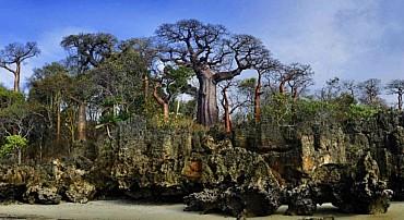 15 gg Viaggio nel Nord del Madagascar e Nosy Be da €2200 mezza pensione