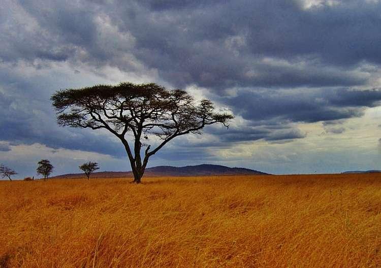 Tanzania: safari privato + mare a Zanzibar - Volo Incluso
