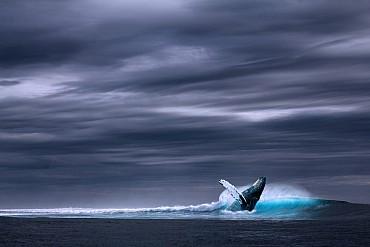 Magico Nord Con Accompagnatore e safari avvistamento Balene