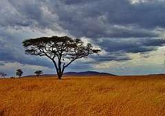 Tanzania. Un esperienza indimenticabile con Safari Mbogo