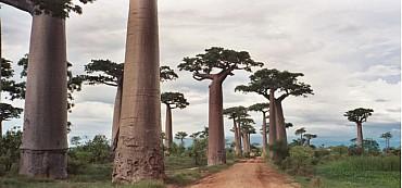 Viaggio nel Madagascar Classico con  Tsingy e Viale dei Baobabs