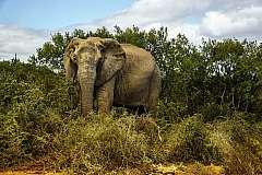 Sudafrica. Safari in Sudafrica low-cost nel Parco Nazionale Kruger (A)