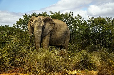 Sudafrica. Safari in Sudafrica low-cost nel Parco Nazionale Kruger