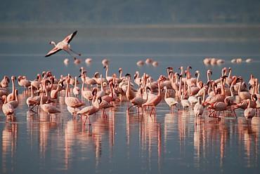 Inverno 2020: Gran Safari Discovery Kenya ed ammira i big 5 in Savana!