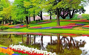 Amsterdam tra i Tulipani in Fiore a partire da soli 525 euro solo colazione