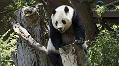 Cina Classica e Panda dal 14 al 22 marzo 2020 - da 1.819 euro