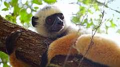 MADAGASCAR - Mini Tour di 4 giorni per ammirare i colori dell'isola!