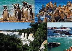 Tour completo: le Meraviglie della Patagonia e le Cascate di Iguazù!