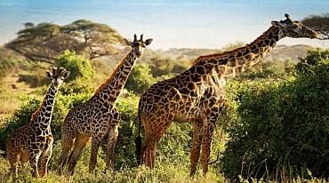KENYA - Safari e soggiorno mare direttamente sulla spiaggia Sardegna2!