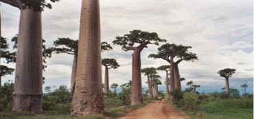 Madagascar Express 12 gg da €1700 pp voli internazionali inclusi