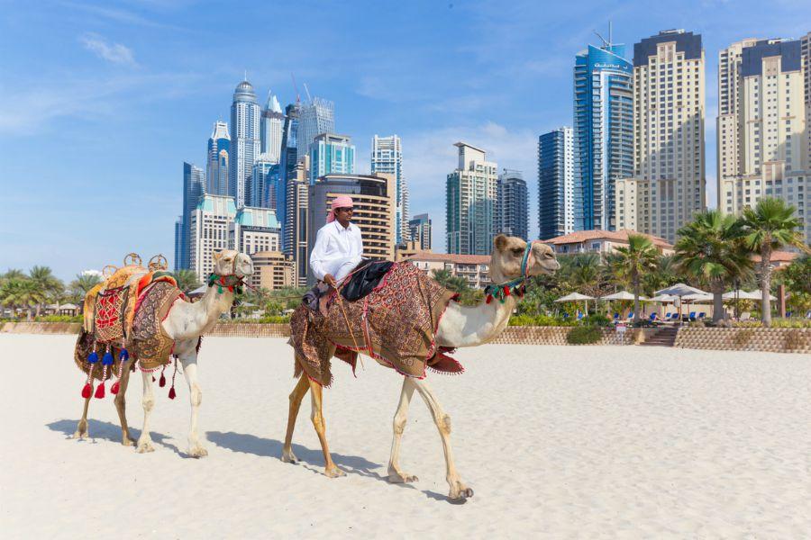 cammelli_a_Dubai