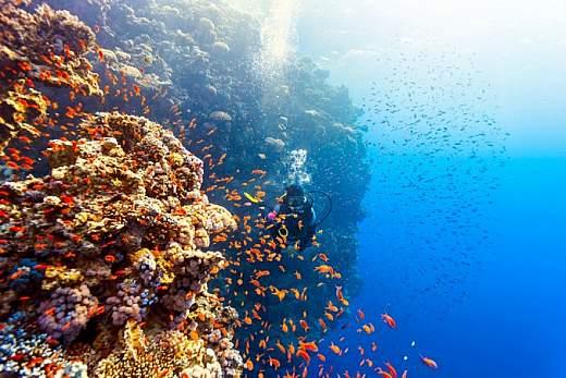 Vacanze sul Mar Rosso: ecco dove andare per scoprire la magia